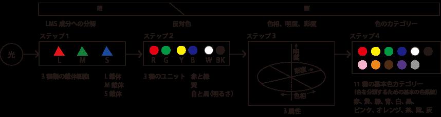 光から色への処理ステップ
